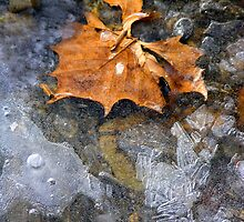 Frozen in Time by Tibby Steedly