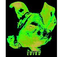 Sunwatcher: Laika Green Photographic Print