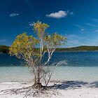 Front Row Tree by Paul Costin