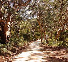 Boranup Forest by georgieboy98