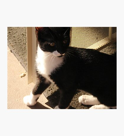 Tuxedo Kitty Photographic Print
