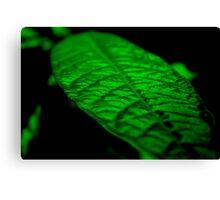Fluorescent Green Canvas Print
