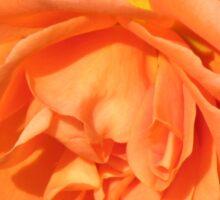 Orange Wildfire - Miniature Rose Sticker