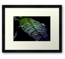 Natural Solar Cells Framed Print