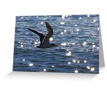 crested tern Greeting Card