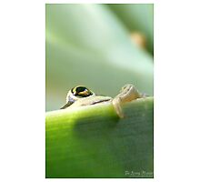 Spying Monster Photographic Print
