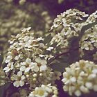 Tiny White Flowers in Spring by lindsycarranza