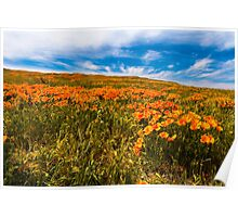 Lancaster Poppy Fields, Welcome Spring Poster