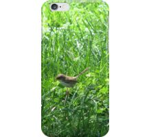 Baby female superb blue wren in sunny grass iPhone Case/Skin