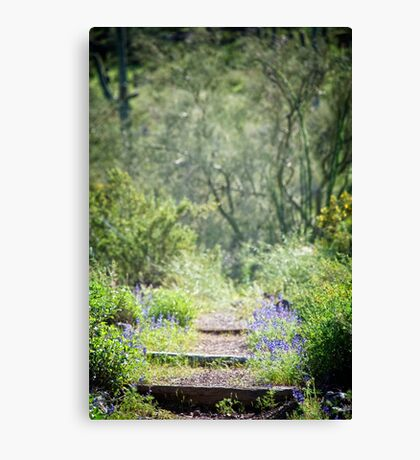 The Lupin Way  Canvas Print