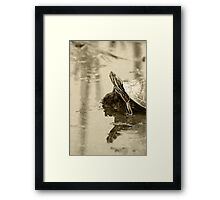 Painted Turtle on Mud in a Marsh Framed Print