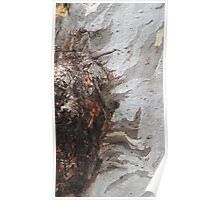 Gum tree bark 13: the burl up close Poster
