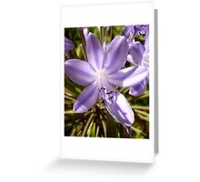 Purple up close and personal Greeting Card