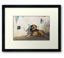 Dog in San Cristobal de las Casas Framed Print
