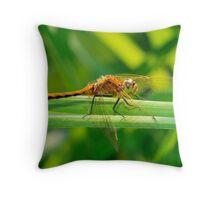 Dragonfly Orange on Green  Throw Pillow