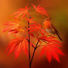 Japanese Maple & Robin by Cliff Vestergaard