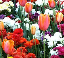 Tulips Toowoomba Qld Australia by sandysartstudio