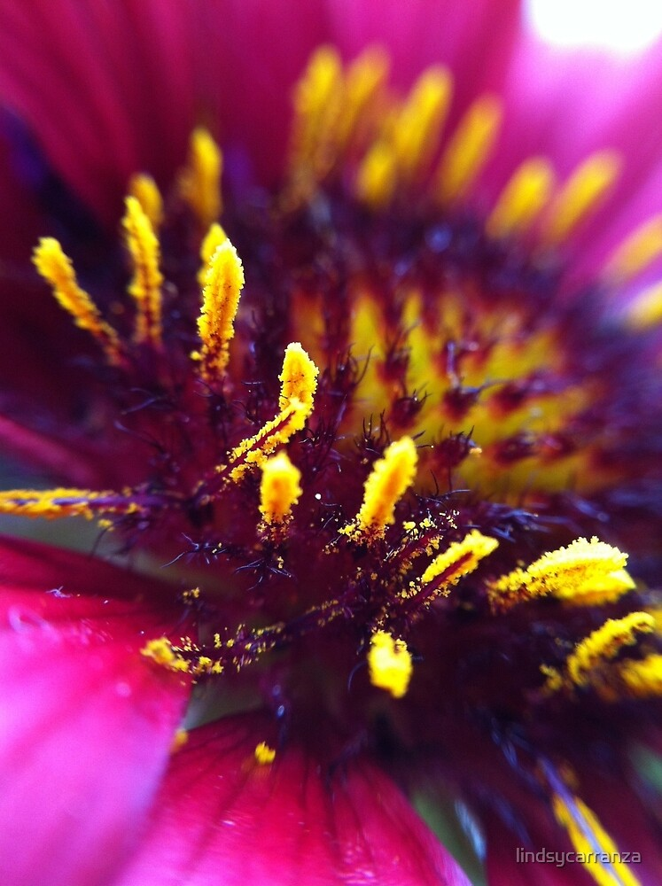 Close Up Pink and Yellow by lindsycarranza