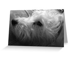 Pixie - Portrait Study in Black and White Greeting Card