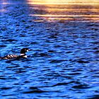 Loon in Gold by Wayne King