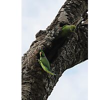 Parakeets Photographic Print