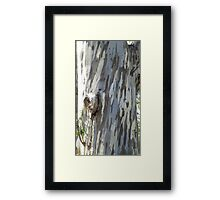Gum tree 9: three trunks and a twisted knee. Framed Print