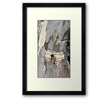 Gum tree bark 8: creased knee Framed Print