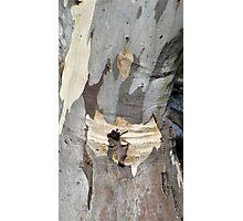 Gum tree bark 8: creased knee Photographic Print