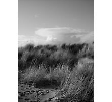 Dune Grass Photographic Print