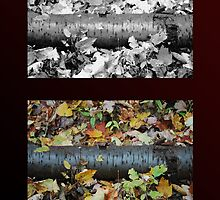 Log in Fall Composite by Sarah McKoy