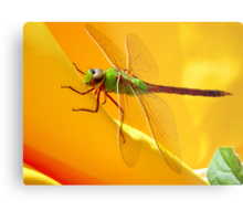 Majestic Green Darner Dragonfly Metal Print