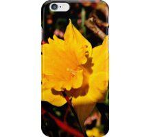 Sun on the Daffodils iPhone Case/Skin