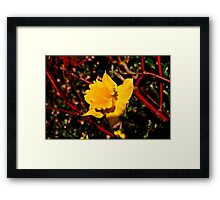 Sun on the Daffodils Framed Print