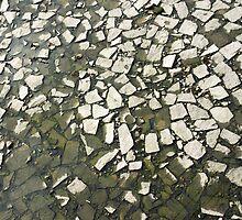 the contrast by dominiquelandau