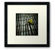 traces of autumn Framed Print