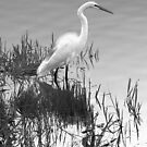 The Great White Egret (Chroma Solarize) by Virginia N. Fred
