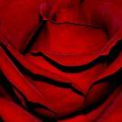 Heart of a Rose by Karen  Betts