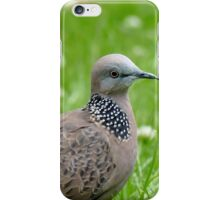 Malay Spotted Dove - NZ iPhone Case/Skin