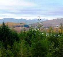 Fir Tree View by Braedene