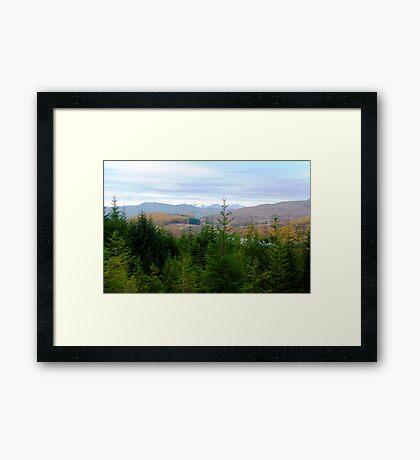 Fir Tree View Framed Print
