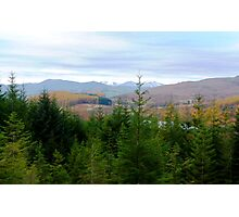 Fir Tree View Photographic Print