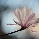 Pastel Magnolia by Linda Cutche