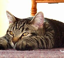 Flat out exhausted ! by Jan  Tribe