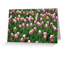 tulips Greeting Card