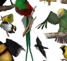 Birds of the Yucatan Sticker