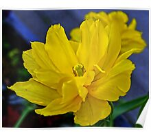 Yellow Tulip..... Poster