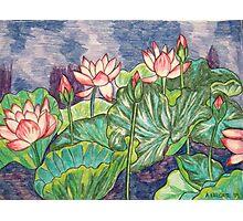 Lotuses I Photographic Print