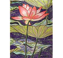 Lily/Lotus Photographic Print