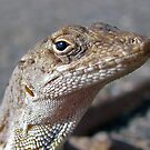 Brown Anole Looking at You by sailorsedge