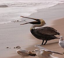 Pelican Lunch by Craig Bernstein